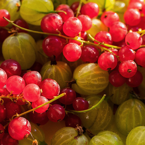 Currants & Gooseberry
