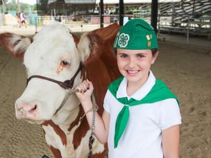 Virtual Livestock Sale