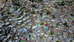 Medellín estrena la primera Oficina de Resiliencia de Colombia