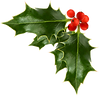 holly-clipart-transparent-background-18.