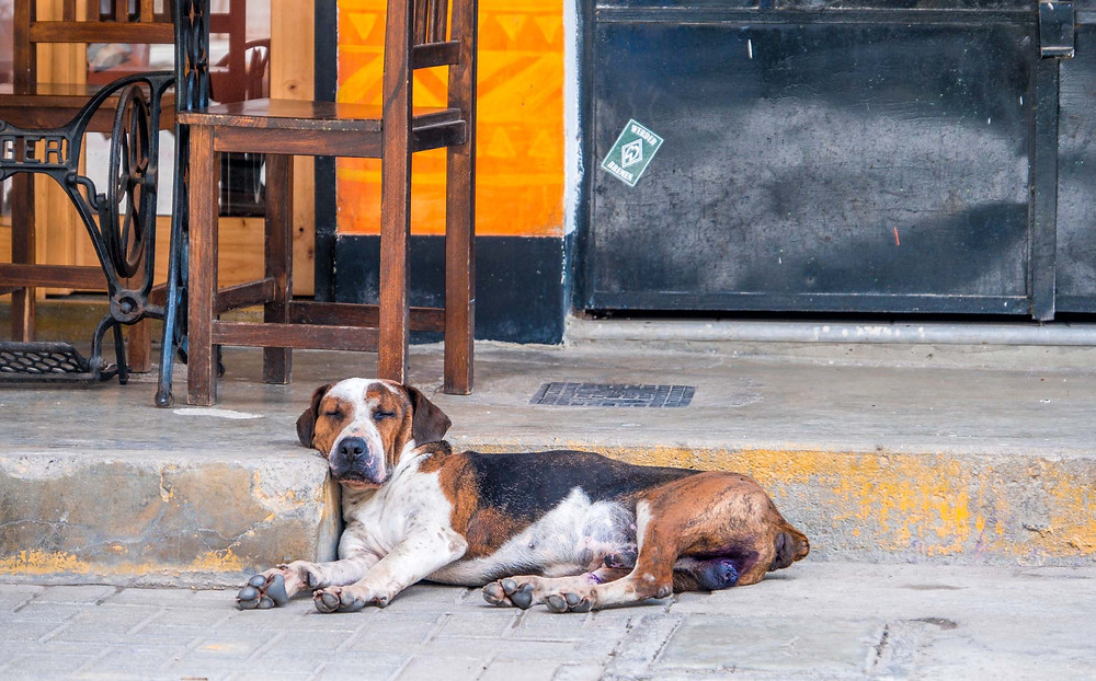 One of the local street dogs having a siesta. AvVida.co.uk