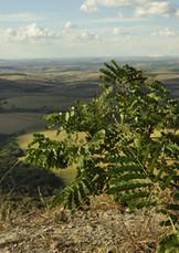 Serra de Carrancas