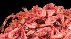 crevettes-matane-close-900x600-678x381-r