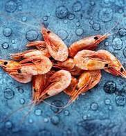 crevettes écaille.jpg