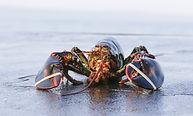 lobster beach.jpg