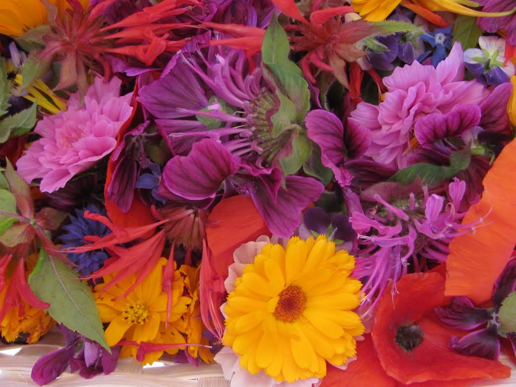 Fleurs comestibles www.vivherbes.com