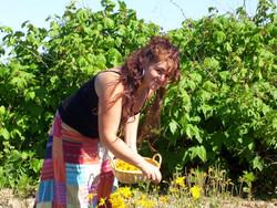Arnica et Leïlah www.vivherbes.com
