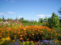 Jardin-1 www.vivherbes.com