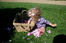 Plaisir des roses www.vivherbes.com