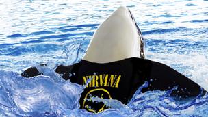 Self-Conscious Orca Wears Nirvana T-Shirt in Pool