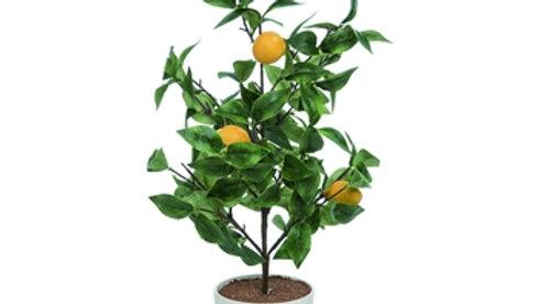 Lemon Zest Tree