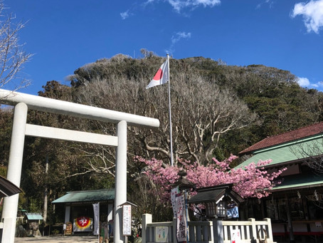 なぎなみ神社と桜満開(すぎ・・・)