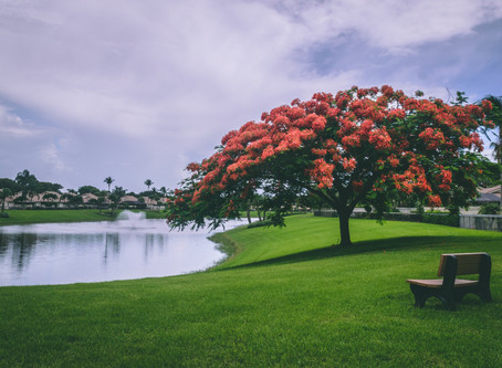 Green spaces in stress management