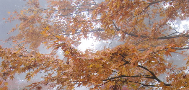 Image of Autumn leaves in Shikoku, Japan