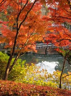 Eikando gardens, Japan