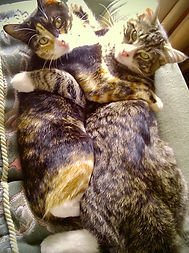 Two cats hugging