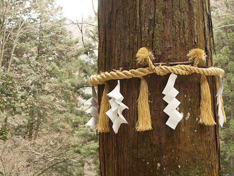 Shimenawa rope around a sacred tree - Japan