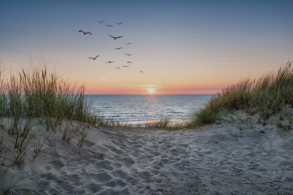 Sand dunes on the beach at sunset_edited.jpg
