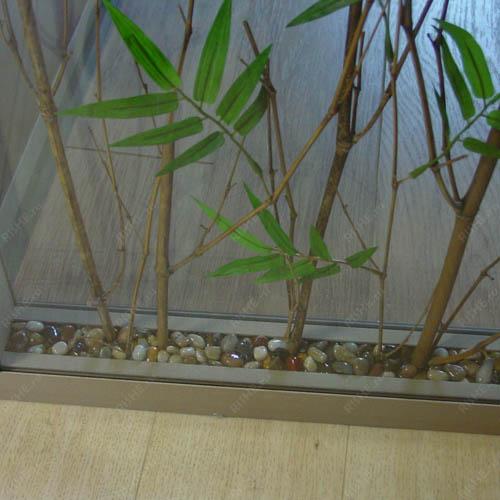 Растения в перегородке, крупный план