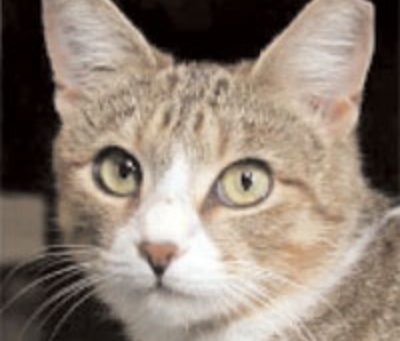 How Do You Know If A Community Cat Is Fixed?