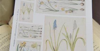 Bogen mit Frühlingsmotiven- Sheet with Spring motifs