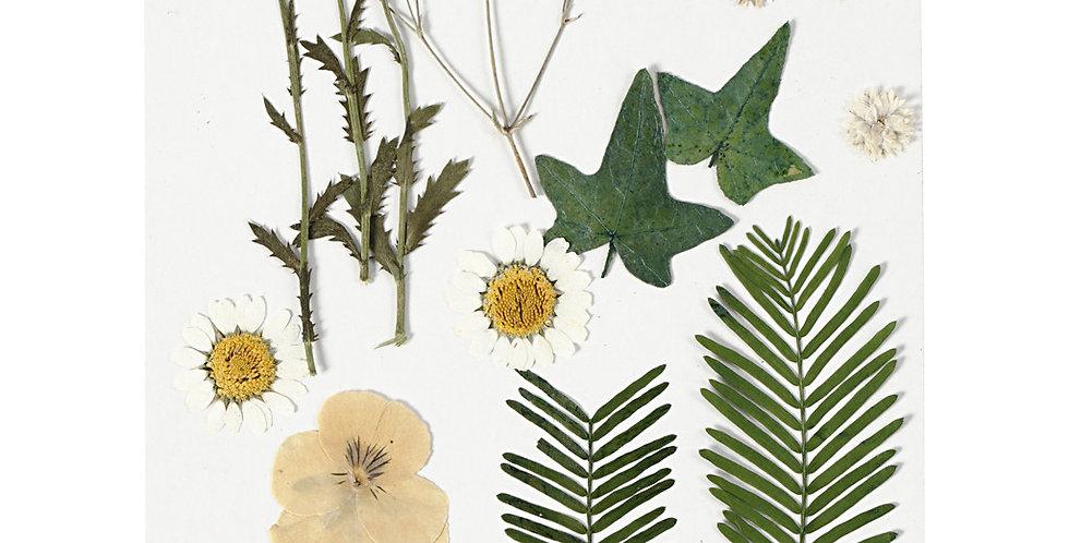 Gepresste Blüten und Blätter, naturweiss