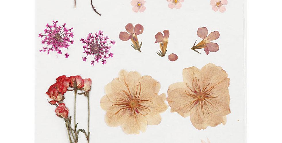 Gepresste Blüten und Blätter Hellrose