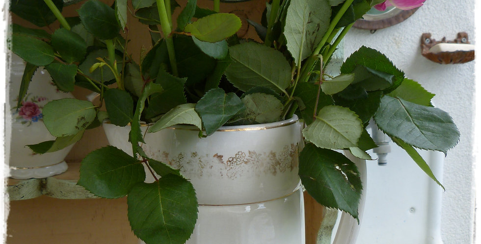 Vase - Vase