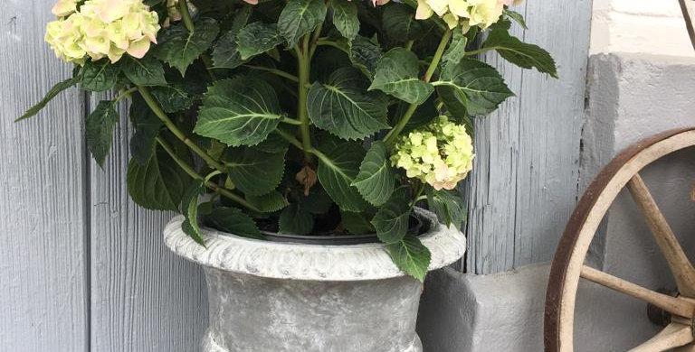 Blumentopf Gross - Flowerpot big