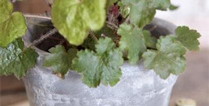 Blumentopf Pastoral. Flower pot