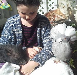 lions bay petting pen pig pigeon 2016 .j