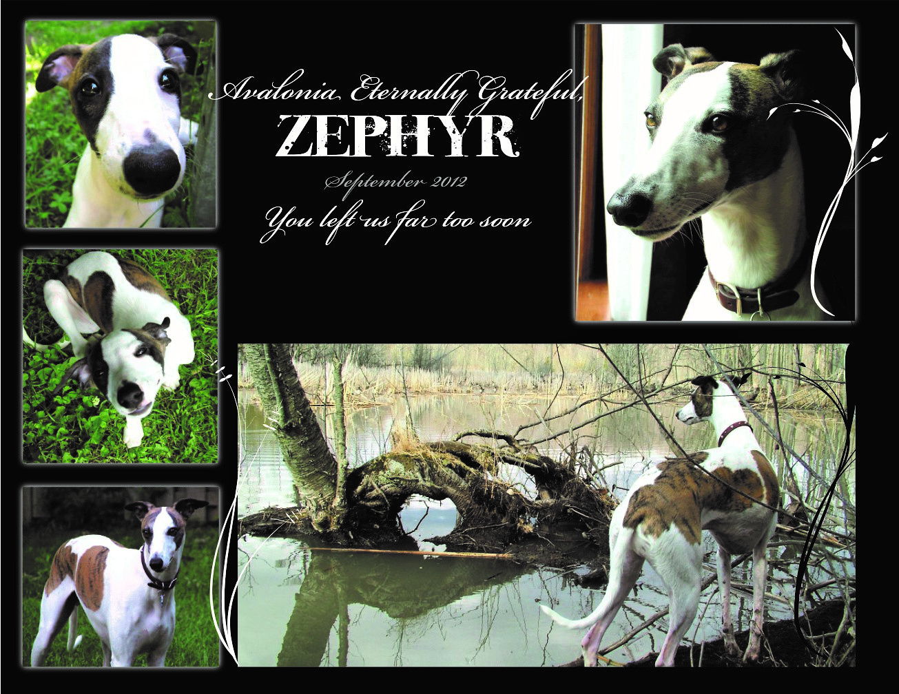 Tribute to Zeph by Bob Chafe