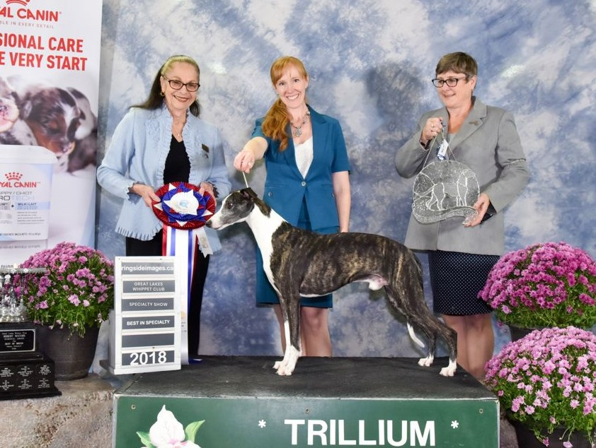 Jackson goes Best In Specialty Show!