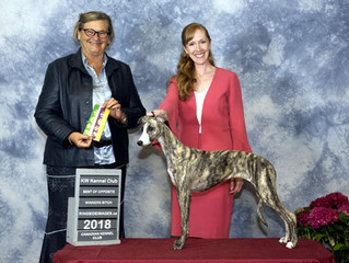 Angel at the KW Kennel Club