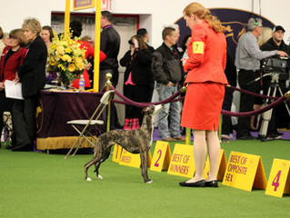 Westminster Kennel Club, NYC!!
