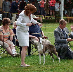 Canadian Whippet Club National 2015