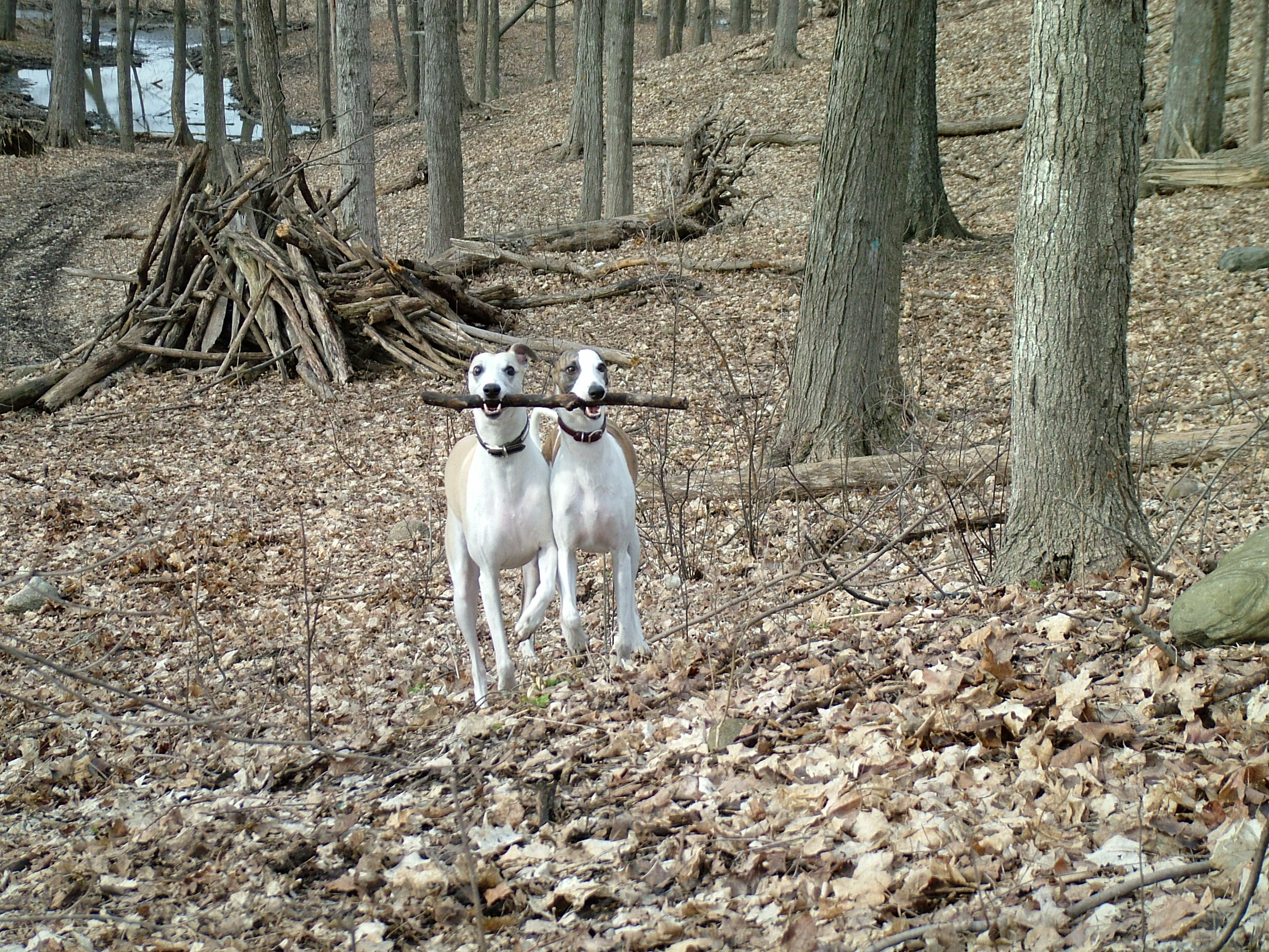 Enjoying a hike with his buddy Zeke
