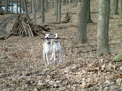 Enjoying a hike with his buddy Zeke
