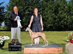 Sarnia Kennel Club July 2018