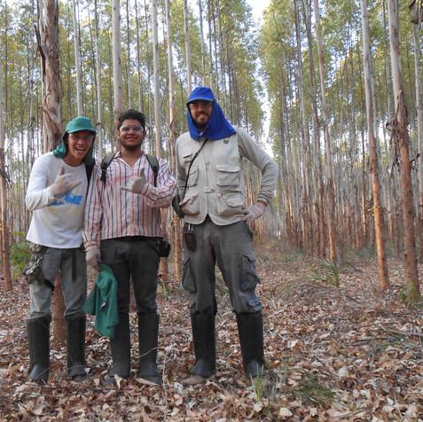 inventário florestal quantitativo