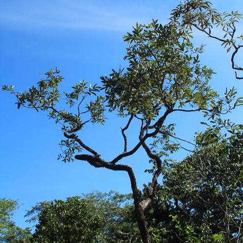 inventário florestal - nativas