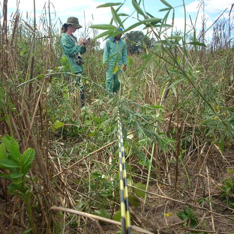 monitoramento e avaliação da vegetação