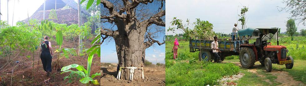 Plantons Des Arbres écologie globale