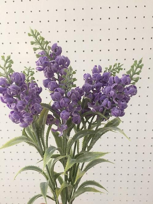 Snow-Lavender สโนว์ลาเวนเดอร์ x 7
