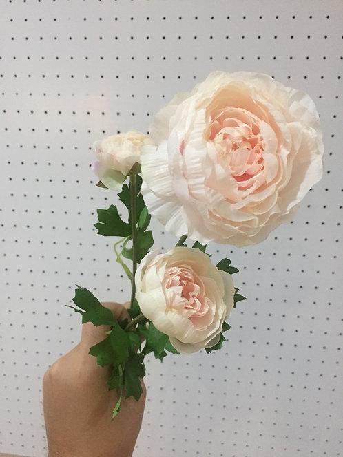 Peach Ranunculus รานังคูลัส (สีพีช)