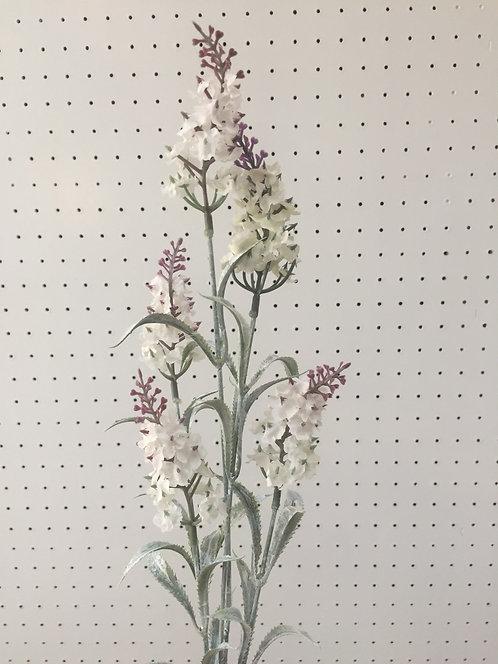 White Lavender ลาเวนเดอร์สีขาว