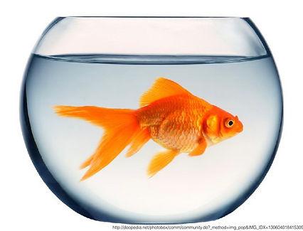 goldfish.001.jpeg