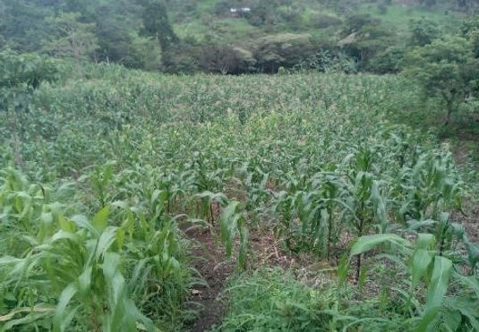 Growing+Crops+in+the+Dry+Season_Seasonal
