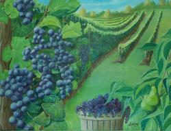 Pick of the Vineyard