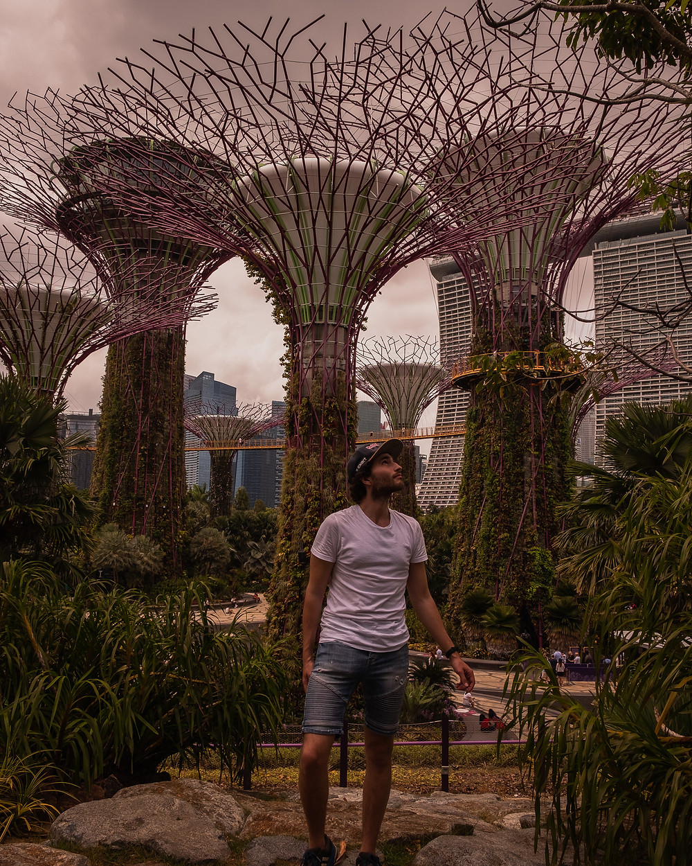 Instagrammable Singapore - Supertree Grove
